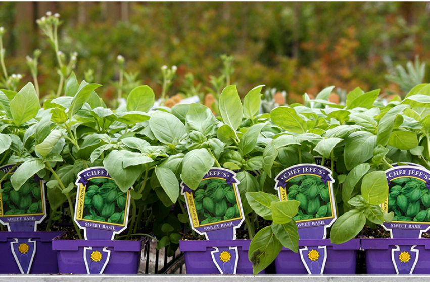 Herbs, McDonald Garden Center
